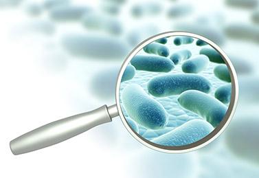 Direkte Mikrobiologie