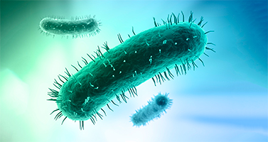 Neue Mikroorganismen